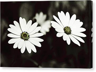Canvas Print featuring the photograph Twins  by Lana Enderle