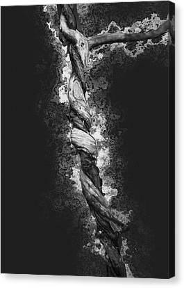 Twisted 2 Canvas Print by Jack Zulli