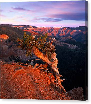 Twisted Forest Canvas Print by Leland D Howard