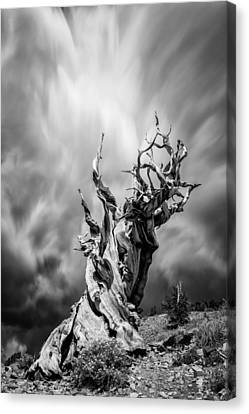 Twisted In Time Canvas Print