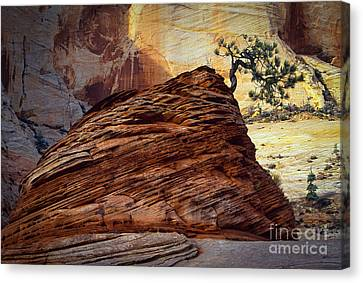 Twisted Juniper Canvas Print by Inge Johnsson