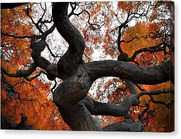 Twisted Canvas Print by Kristopher Schoenleber