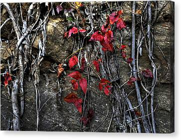 Twisted Red Canvas Print by Craig T Burgwardt