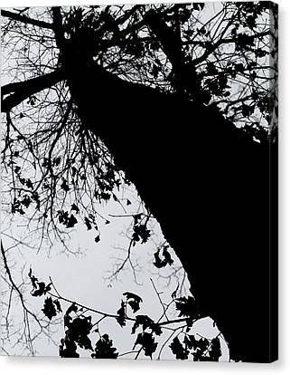 Canvas Print featuring the photograph Twisted Tree by Candice Trimble
