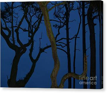 Twisted Trees At Twilight Canvas Print by Anna Lisa Yoder