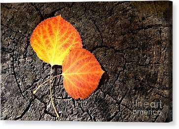 Two Aspen Leaves Canvas Print
