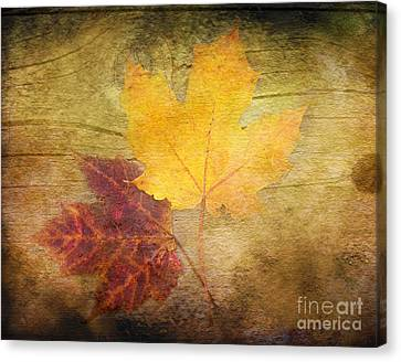 Two Autumn Leaves Canvas Print