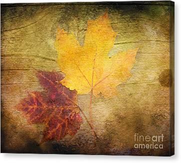 Two Autumn Leaves Canvas Print by Kathi Mirto