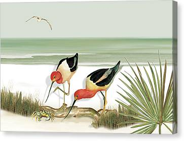 Two Avocets Canvas Print by Anne Beverley-Stamps