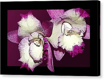 Two Baby Orchids Canvas Print by Phyllis Denton