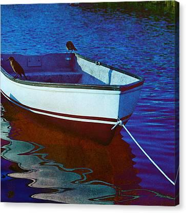 Delphin Squared Canvas Print by Laura Fasulo