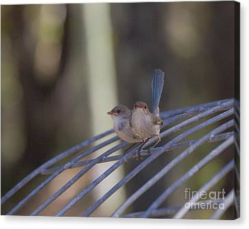 Two Birds On Wire Canvas Print