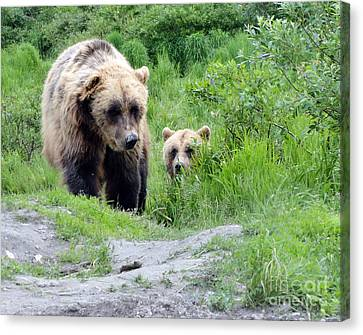 Two Brown Bears Canvas Print