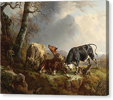 Two Bulls Defend Against A Cow Attacked By Wolves Canvas Print by Jacques Raymond Brascassat