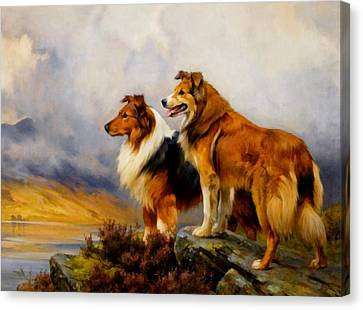 Two Collies Above A Lake Dr Canvas Print by Wright Barker