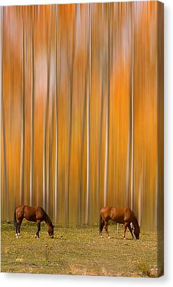 Two Colorado High Country Mystic Autumn Horses Canvas Print