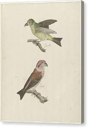 Two Crossbills, Possibly Christiaan Sepp Canvas Print by Quint Lox