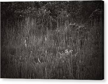 Canvas Print featuring the photograph Two Deer Hiding by Bradley R Youngberg