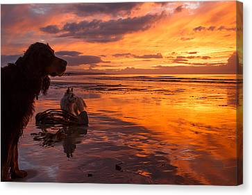 Two Dogs Look Out To Sea During An Amazing Beach Sunset. Canvas Print