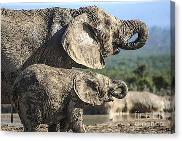 Two Ellies Drinking Canvas Print