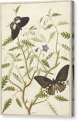 Two Exotic Butterflies On A Blooming Bush Canvas Print by Quint Lox