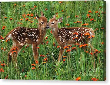 Canvas Print featuring the photograph Two Fawns Talking by Chris Scroggins