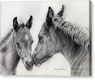 Horse Lover Canvas Print - Two Foals by Hailey E Herrera