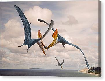 Food In Mouth Canvas Print - Two Geosternbergia Pterosaurs Fighting by Sergey Krasovskiy