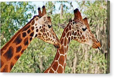 Two Giraffes Canvas Print by Aimee L Maher Photography and Art Visit ALMGallerydotcom
