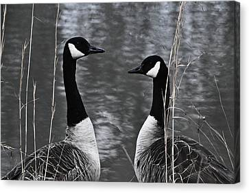 Two Goose Tango Canvas Print by Mary Zeman