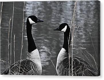 Two Goose Tango Canvas Print