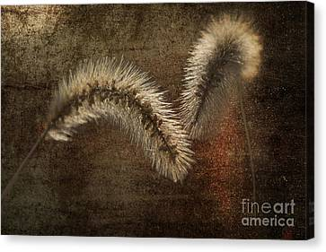 Two Grass Flowers Canvas Print by Heiko Koehrer-Wagner