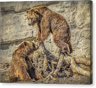 Mammals Canvas Print - Two Grizzly Bears     by LeeAnn McLaneGoetz McLaneGoetzStudioLLCcom