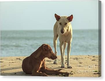 Two Homeless Dogs On The Beach Canvas Print by Patricia Hofmeester
