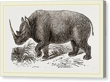 Two-horned Rhinoceros Canvas Print