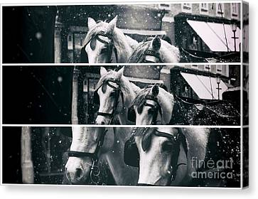 Two Horse Panels Canvas Print