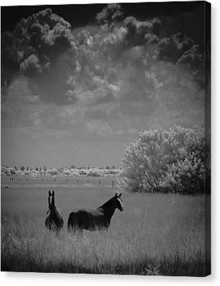Two Horses Canvas Print by Bradley R Youngberg