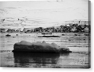 two humpback whales megaptera novaeangliae logging or sleeping among floating ice in Fournier Bay An Canvas Print by Joe Fox