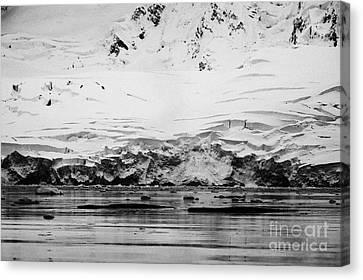 two humpback whales megaptera novaeangliae logging or sleeping in Fournier Bay Antarctica Canvas Print by Joe Fox