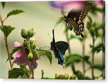 Two In Flight Canvas Print by Rick Friedle