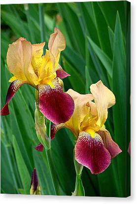 Two Iris Canvas Print by Rodney Lee Williams
