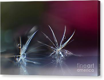 Two Jewels Canvas Print by Eden Baed