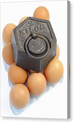Two Kilos Weight On Eggs Canvas Print by Sami Sarkis