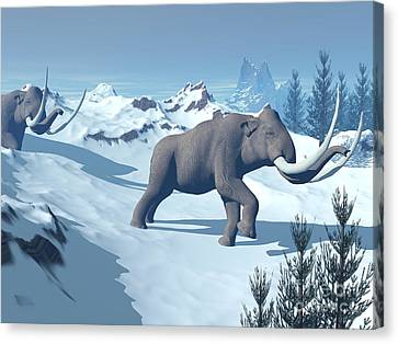 Two Large Mammoths Walking Slowly Canvas Print