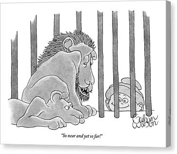 Two Lions In A Cage Look At A Young Boy Who Canvas Print