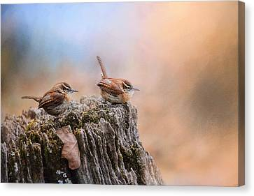 Two Little Wrens Canvas Print