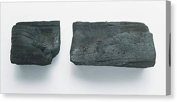 Two Lumps Of Vine Charcoal Canvas Print by Dorling Kindersley/uig