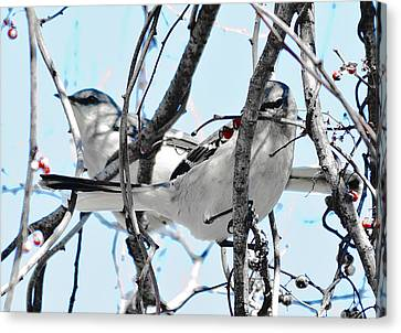 Two Mocking Birds Canvas Print