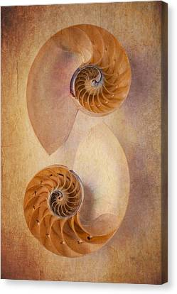 Two Nautilus Shells Canvas Print by Garry Gay