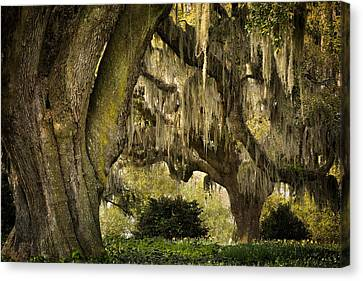 Two Oaks Canvas Print by Denis Lemay
